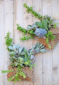 Perfect for the sidewall of my terrace - Easy DIY Project: How to Make a Pocket Wall Planter — Apartment Therapy Reader Project Tutorials Succulents In Containers, Cacti And Succulents, Hanging Succulents, Cactus Plants, Air Plants, Indoor Plants, Garden Art, Garden Design, Herb Garden