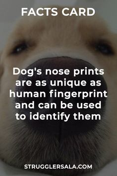 Dog nose - All the Interesting Information You're Wondering Here Wierd Facts, Wow Facts, Real Facts, Wtf Fun Facts, Funny Facts, Random Facts, True Interesting Facts, Interesting Facts About World, Intresting Facts