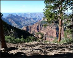 5 Reasons Not To Skip The North Rim of The Grand Canyon National Park