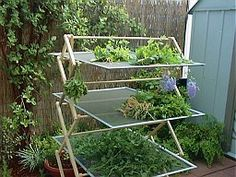 Drying herbs- window screens on a clothes drying rack.