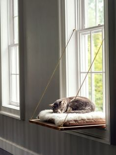 Diy Cat Bed, Diy Bed, Handmade Home, Martha Stewart, Cat Window Perch, Window Sill, Window Ledge Decor, Room Window, Diy Hanging Shelves