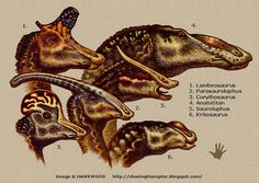 Hadrosaurs Heads - Anatotitan, Kritosaurus, Saurolophus Lambeosaurus, Parasaurolophus and Corythosaurus - by Hawkwood