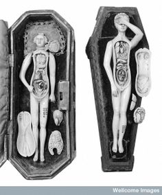 Anatomical figures in ivory; 2 females.
