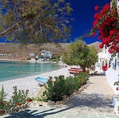 Greek Flowers, Places In Greece, Forest Mountain, Greece Vacation, Greece Islands, Tree Forest, Travel Planner, Flowering Trees, Beautiful Beaches