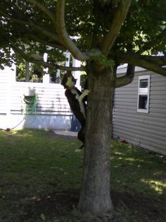 My Benny~ He's 15 months old and LOVES to climb trees to chase those illusive SQUIRRELS !!!!