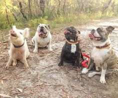 Listen up everyone: Olive and her canine friends listen to here what's next on the agenda...