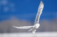 Take off by Brodmann 17
