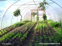 Charles Dowding explains all you need to know when looking into buying a polytunnel: size, placing, ventilation, material and maintenance.