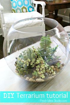 How to DIY a Terrarium: 4 Step tutorial