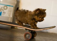 22 Of The Most Totally Extreme (And Adorable) Skateboarding Animals: puppy
