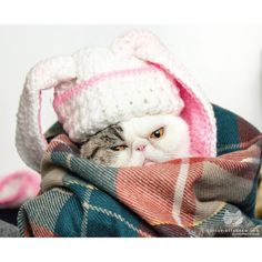 From @juiceecat: Winter mood. #catsofinstagram [source: http://ift.tt/1NzmsIM ]