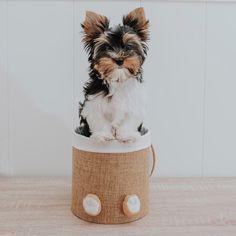 """Denver The Dog on Instagram: """"Hola, que guay ya es viernes!! Y a mi familia humana ya le han dado las vacaciones del cole,asin que ahora iremos  a muchos sitios…"""" Dado, Denver, Travel Mug, Terrier, Mugs, Tableware, Instagram, Friday, Vacations"""