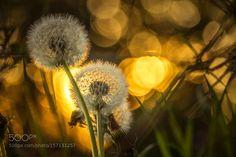 Sunlight by ErikNorelv. @go4fotos