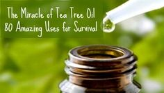 The Miracle of Tea Tree Oil: 80 Amazing Uses for Survival   Backdoor Survival