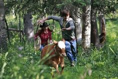 Lou comes back from Dubai to spend time with the family. Ty and Amy discover where her father's rustled cattle are being pastured and the whole family rides out to bring them back. Heartland Season 4, Heartland Episodes, Watch Heartland, Amy And Ty Heartland, Heartland Cbc, Ty And Amy, Alisha Newton, Graham Wardle, Amber Marshall