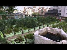 Les toits de Paris transformés en potagers : un concept profitable à tous | Daily Geek Show