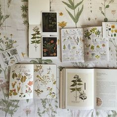 """You guys look how awesome this photo is by @thecuriousnomad of my #smalladventuresjournal and her beautiful collection of botany books. Thank you so much…"" 
