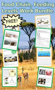 This is a FREE 10 page homework or classwork work bundle about food chains, feeding levels, herbivores, carnivores, decomposers, biomass pyramids, and much more. Answers are included - Enjoy!