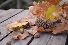 Liście, Jesień, Szyszka