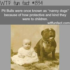 Pit Bulls were farm dogs in the earlier decades.