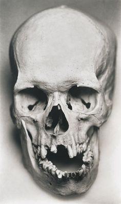 human skull no jaw - Google Search