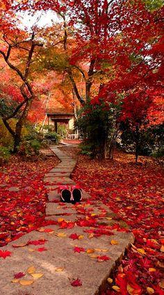 Wat een prachtige kleuren zo in de herfst in Kyoto!