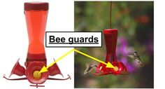 Bee guards are one way to keep bees off your hummingbird feeders. Learn the other 6 tips here. Keep Bees Away, Hummingbird Plants, Butterfly Species, How To Attract Hummingbirds, Humming Bird Feeders, Fun Hobbies, Bottle Design, Bee Keeping