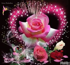 good evening images with rose ile ilgili görsel sonucu Flowers Gif, Beautiful Rose Flowers, Beautiful Gif, Love Rose, Heart Wallpaper, Love Wallpaper, Gif Bonito, Love You Gif, Heart Gif