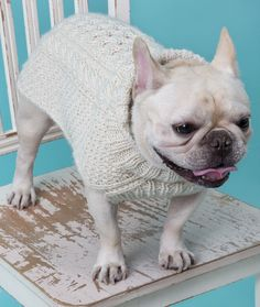 Free Ravelry pattern: Cabled Dog Sweater Knitting Pattern pattern by Linda Cyr (sized to fit a French Bulldog! Knitted Dog Sweater Pattern, Knit Dog Sweater, Dog Pattern, Sweater Knitting Patterns, Dog Sweaters, Free Pattern, Free Knitting, Dog Jumpers, Dog Coats
