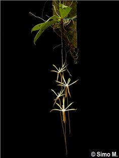 Amazing Unusual Plants To Grow In Your Garden Rare Orchids, Rare Flowers, Exotic Flowers, Beautiful Flowers, Unusual Plants, Rare Plants, Exotic Plants, Miniature Orchids, Miniature Plants