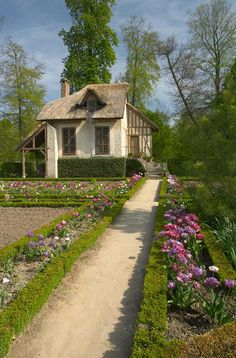 Pink tulips in cottage garden, Marie Antoinettes villages, Versailles by Offrench