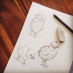 Spring chick sketch Easter chick study  Wall art prints for home decor