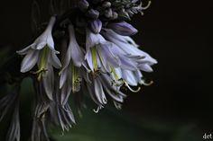 #kwiaty #fotografia