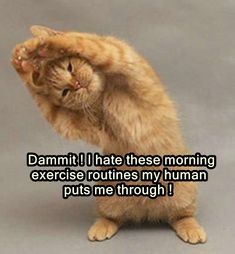 Morning Workout Routine, Animal Humour, Exercise, Funny Cats, Animals, Ejercicio, Animales, Animaux, Funny Kitties