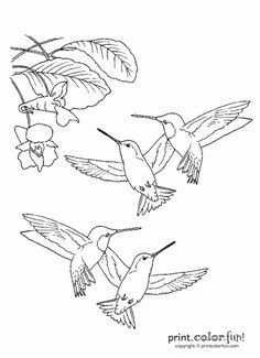 Hummingbirds Printable Coloring Page