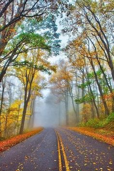 A Foggy Drive Into Autumn (Blue Ridge Parkway, North Carolina) by Dan Carmichael cr. Beautiful Roads, Beautiful Landscapes, Beautiful World, Beautiful Places, Blue Ridge Parkway, Blue Ridge Mountains, Asheville, Places To Travel, Places To See