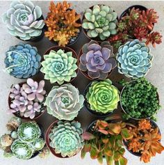 How To Incorporate Plants Into Your Dorm Decor - Society19