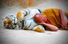 detti di buddha - Cerca con Google