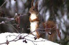Kahler Baum, Eichhörnchen, Wild lebende Tiere, Nagetier