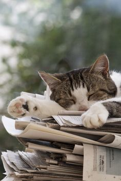 What Better Thing To Do Than Napping On A Pile Of Newspapers
