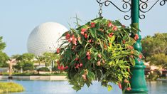 Disney's Hanging Baskets - Southern Living