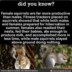 Just like humans, women are more productive