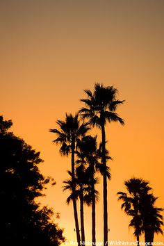 Sunset, Huntington Beach, California; photo by Ron Niebrugge