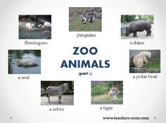 Zoo animals poster