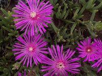 Plant Native: Drought Tolerant Plants for Georgia Native Plant Gardens