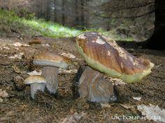 Літні гриби