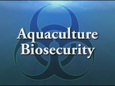 Shrimp Farming: IMPORTANCE OF BIO SECURITY