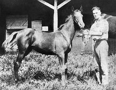 """Man o' War"" as a foal in 1917 - considered one of the greatest Thoroughbred racehorses of all time."