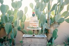 Fine Art Film Naked Cactus Wedding Cake Troon Four Seasons Desert Arizona Sarah Jane Photography Ashley Rae 2nd