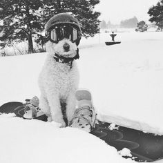#skidawg #fridayfeeling it's a dogs life  get a cool ski job ! #snowboarding #skidog #snow #goggles #mountains #powder #snow